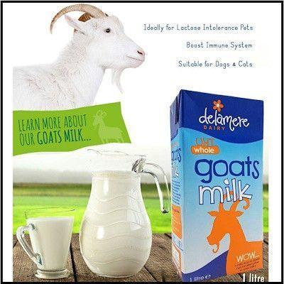 Virgin yak milk