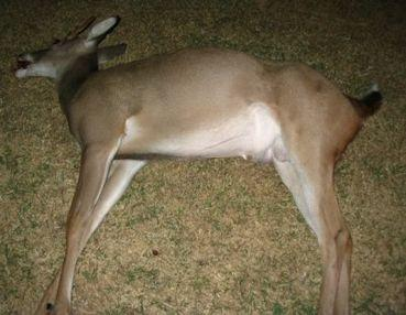 Kitten reccomend Man had sex with a dead deer