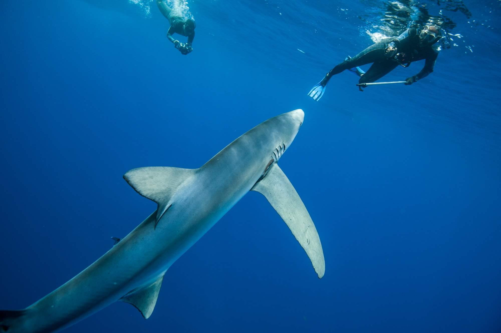 best of Feeding Sperm whale