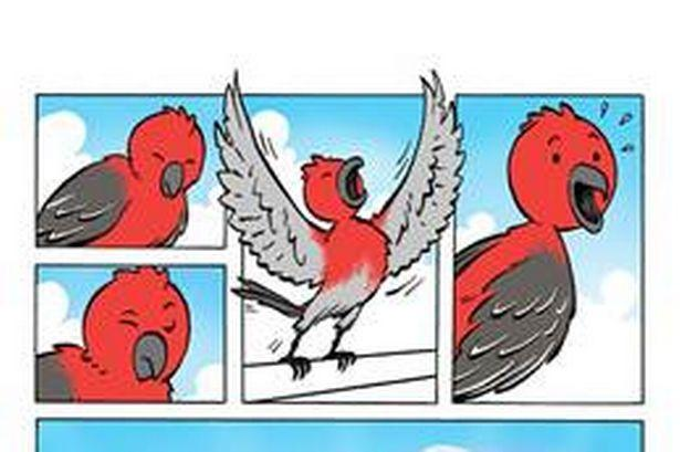 best of Strip Bird comic